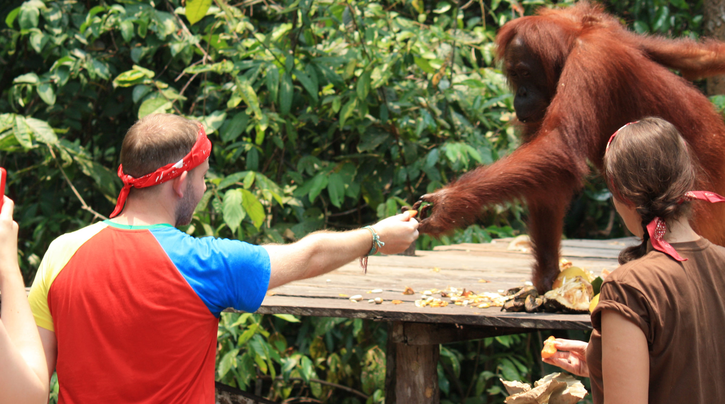 When Paul met Orangutans in the jungle